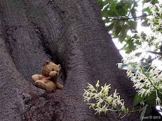wild jungle tree teddy