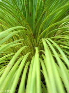 curving green
