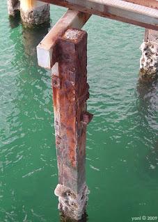 sea rust