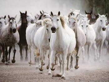 More horses :)