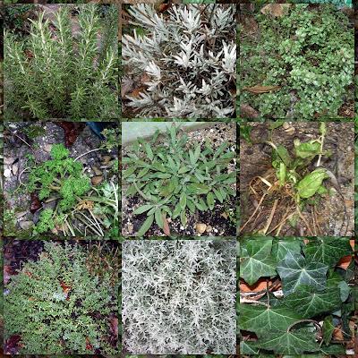 Design Plantes aromatiques et médicinales