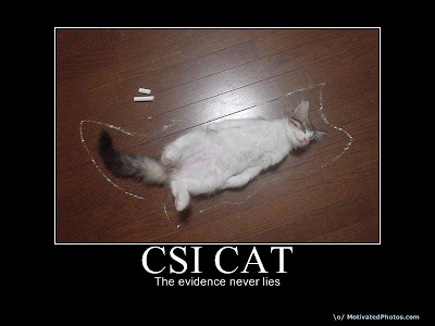 Csi cat demotivational poster