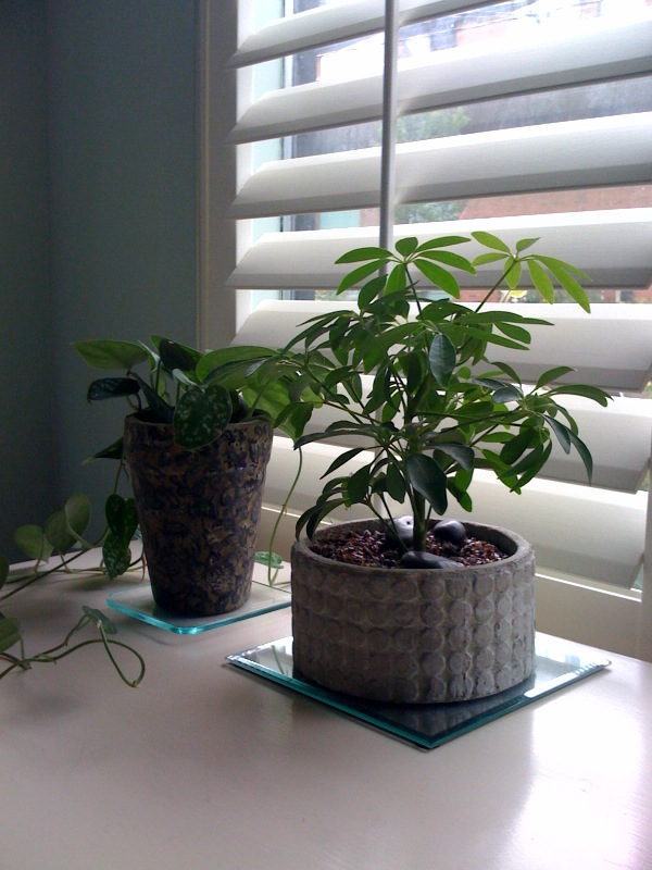 Healthy compromises air purifying house plants for Best air purifying plants for bedroom