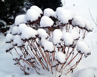arbusti in gradina iarna