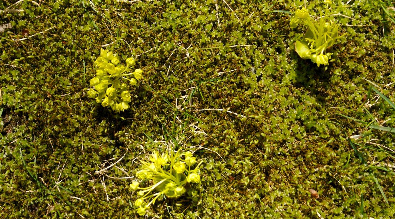 Flora urbana comment verdir sans se salir 1 for Espace vert 91