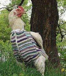 http://2.bp.blogspot.com/_3L1GT2Lecg0/R884QcHvhTI/AAAAAAAAAHs/wVaW5rKs9ik/s320/Chicken%2Bsweater.jpg