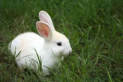 Fotos de animales hermosos, bonitos, bellos