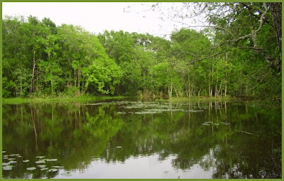 Stubblefield Lake, Sam Houston National Forest, Texas