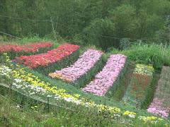 Flower garden in Babag Uno