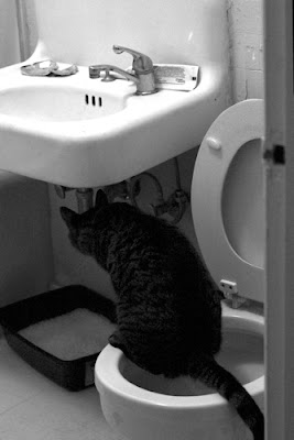 Can Cats Be Trained To Use The Bathroom Outside