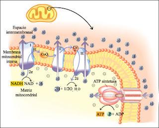 Bioquímica: abril 2009