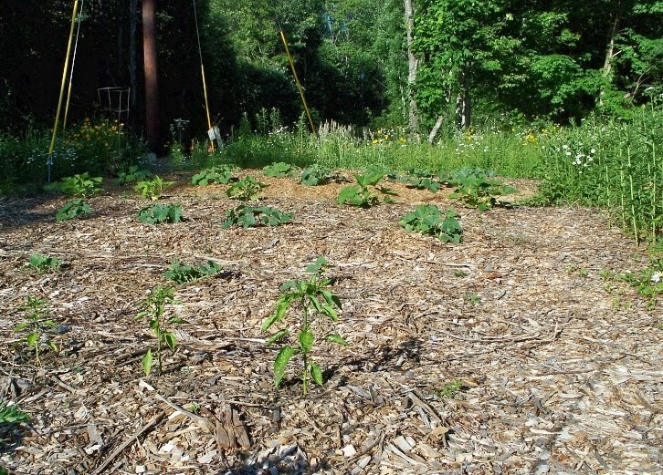outside clyde vegetable gardens and woodchip mulch