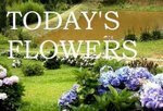 Today's Flower - Sunday