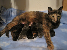 Pru and her Kittens