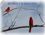 SO HOT I'M MOLTING