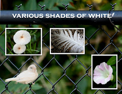 VARIOUS SHADES OF WHITE
