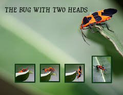 THE BUG WITH TWO HEADS