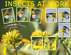 INSECTS AT WORK