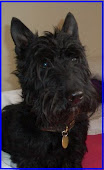 Jack, my Scottie Boy!