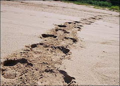 Rhinoceros Tracks