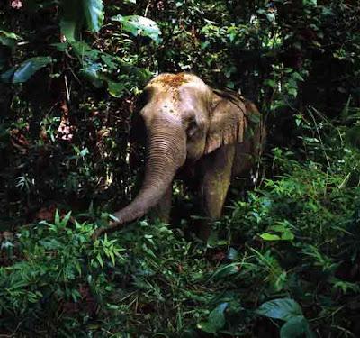 ong bak 2, elephant