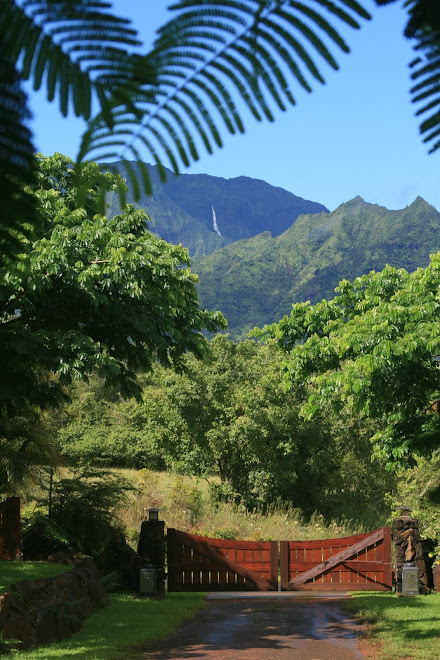 Looking Out Towards The Waterfall Above Hanalei Bay And Hihimanu.