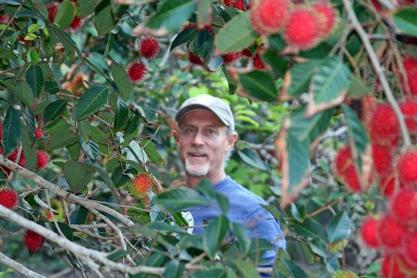 Bill enjoying the fruit