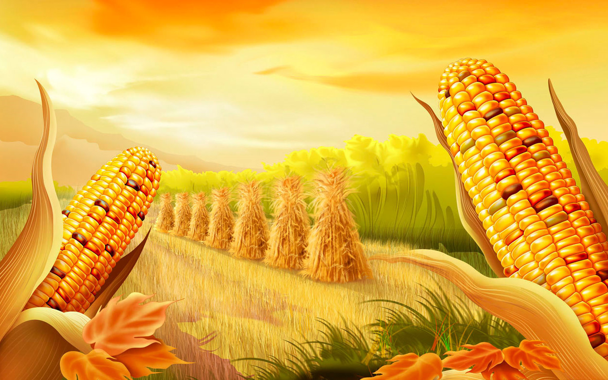 http://2.bp.blogspot.com/_3_-A45YgzHc/TOUSpGwqTOI/AAAAAAAAAFM/eWtv_8ICBHY/s1600/thanksgiving-wallpaper-corn-cartoon.jpg