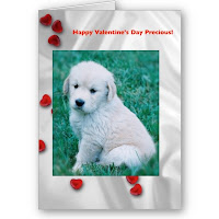 Fluffy White Puppy Valentine Cards