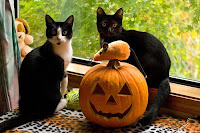 Halloween Kittens Pictures