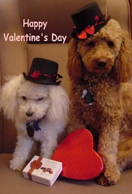 Funny Dog Valentine Card