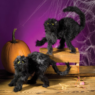 Halloween Black Cat Card Set