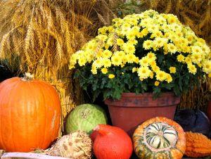 Thanksgiving Autumn Scene Cards