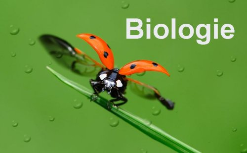 bruce violette: Biologie and Buggin Out On