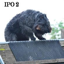 """""""RCI II"""" (IPO II)"""