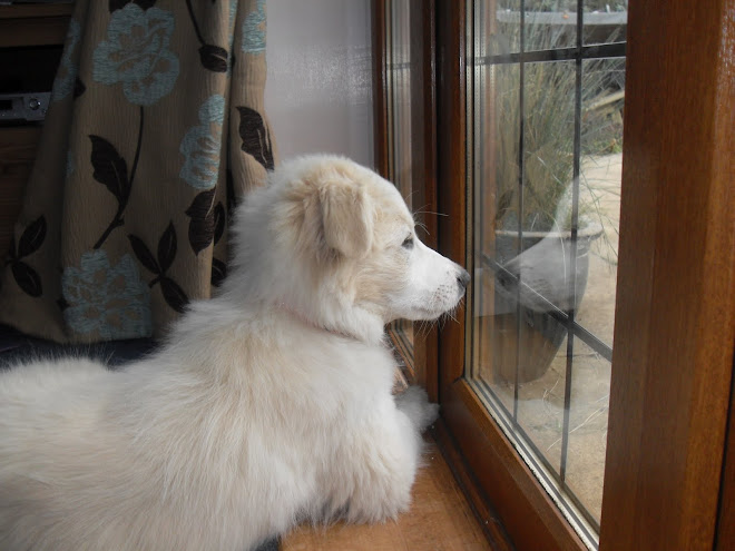 Reflecting Rupert