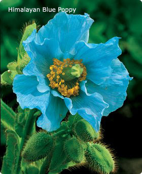 Below Are A Few Of The Blue Flowers I Have Found For Purple To Violet Check Out My Post