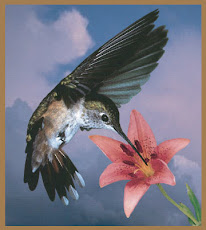 EL COLIBRI