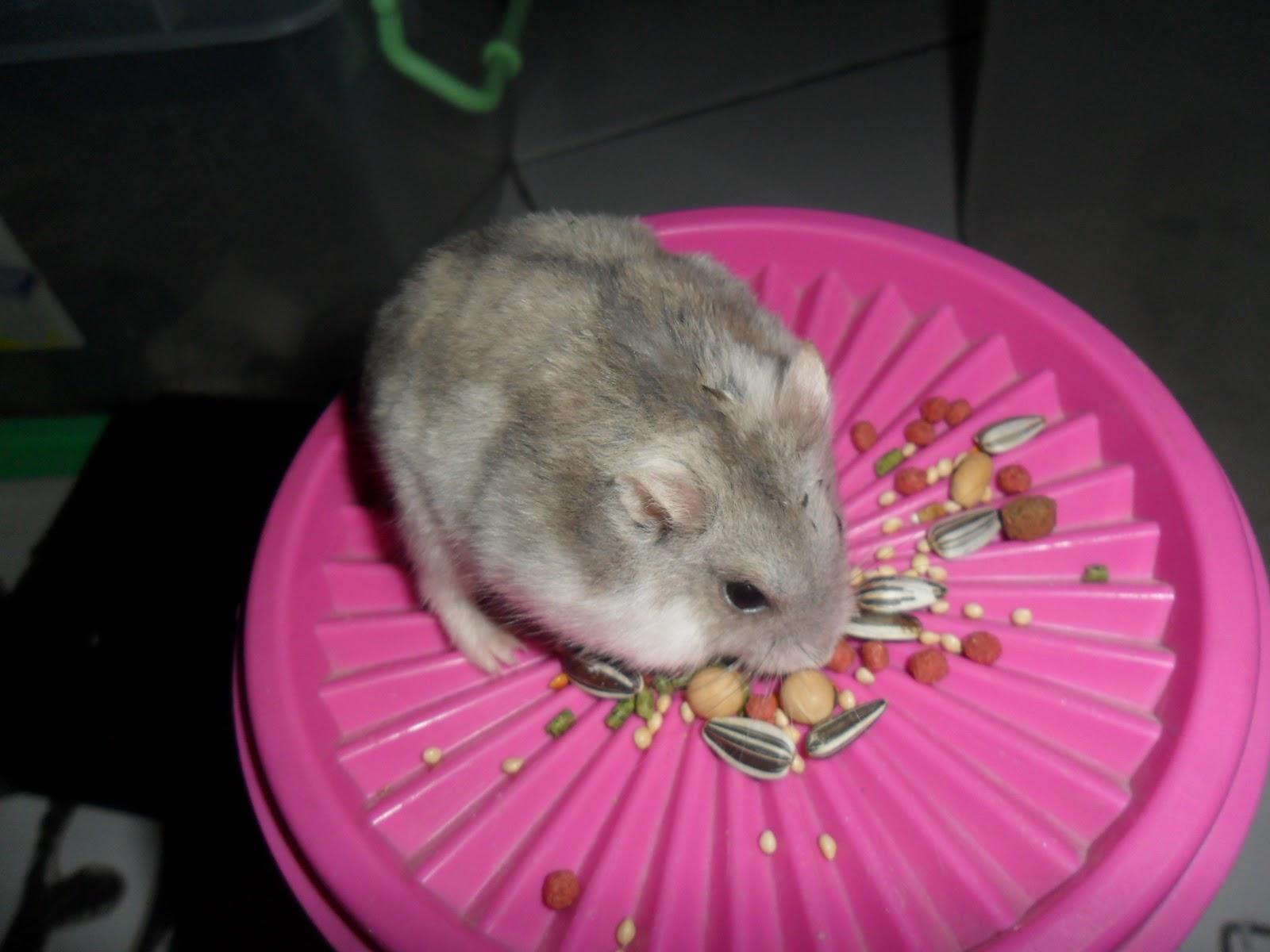 Genthonk Pet Shop Hamster Hibrid