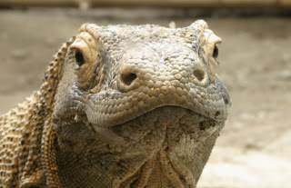 Komodo Island is the NEW 7 Wonders of The World 2