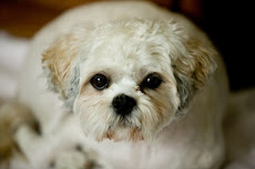 My dog.....Chesney