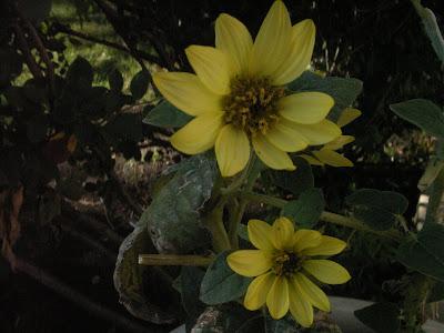 Rogers Park flower