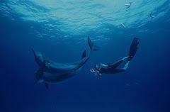 Czy można obudzić delfina uśpionego w każdym z nas?