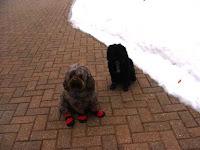 Dogs in Woof Hoofs