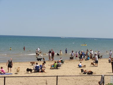 Dog <br />Beach