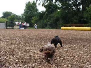 Cookie and Gigi racing