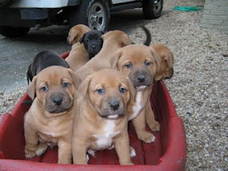Ruby's Pups