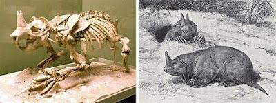十四種已滅絕怪獸 有角囊地鼠