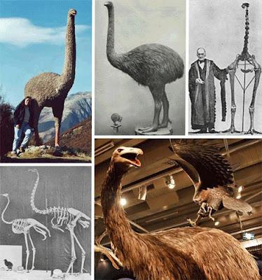 十四種已滅絕怪獸 恐鳥