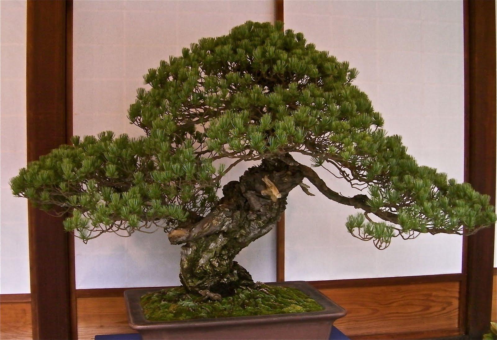 Shoyo En Garden Nikko EkayaSolutions